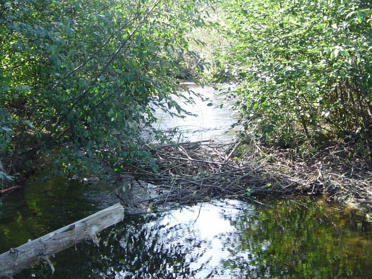 River Restoration: A Collaboration